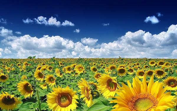 3. Ukraine is 1/3 of global stock of super fertile black soils, and world's #1 wheat and sunflower oil exporter.